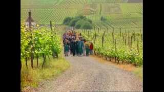 Download Discover the Art of Making Wine Video