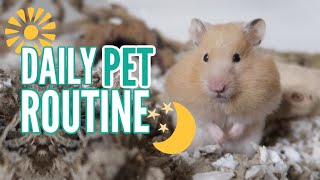 Download My DAILY Pet Routine 2019 Video