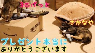 Download 魚に群がる猫たちが愛おしい動画【贈り物】 Video