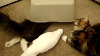 Download Cats and Parrot playing with box Part 3 Video