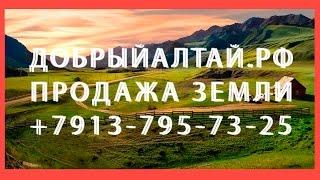 Download Продажа земельного участка Чемал Горно-Алтайск 5,6 Га +7 913 795 73 25 | ДОБРЫЙАЛТАЙ.РФ Video