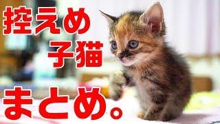 Download 控えめに言って可愛すぎる子猫シリーズ完結記念まとめ Video