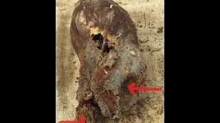 Download Astonishing Newborn Baby Elongated Skull Of Paracas Peru Video