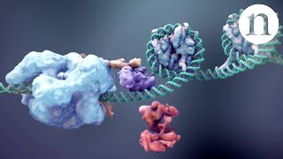 Download CRISPR: Gene editing and beyond Video