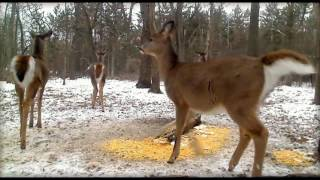 Download Deer Trail Pictures From Yesterday (12-9-16) Video