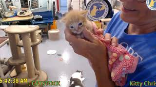 Download Talkative New Kitten Fio 09-03-2019 Video