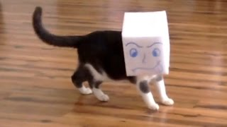 Download HARDEST LAUGH CHALLENGE - Cat Vines COMPILATION - SCARED and CLUMSY cats Video