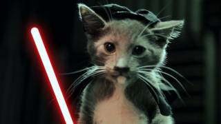 Download Jedi Kittens Strike Back Video