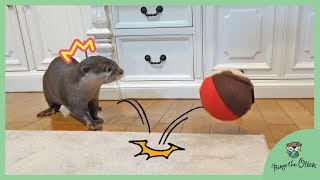 Download カワウソビンゴvs弾む!アンパンマンボール/Otter Bingo VS Jumping Anpanman ball Video