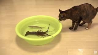 Download شاهد الفيديو لتعرف حقيقة القطط Video