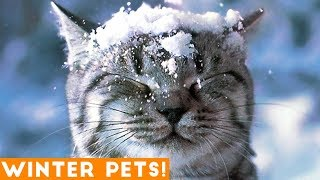 Download Funniest Winter Animal Video Compilation 2018   Funny Pet Videos Video