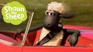 Download Những Chú Cừu Thông Minh - Phần 3 (1 HOUR) Video