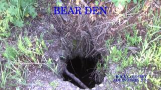 Download BEAR GETS FAWN ON TRAIL CAM LISTEN TO SEE IT Video