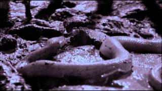 Download Life in Cold Blood 04 Sophisticated Serpents Video