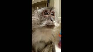 Download Monkey eyebrows on fleek Video