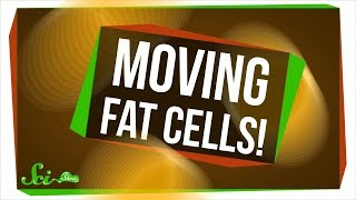 Download We Just Found Out Fat Cells Can Move! Video