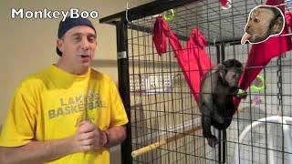 Download Capuchin Monkey Dinner Video