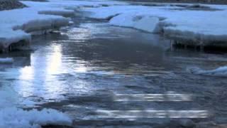 Download Tundra Biome Video