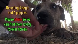 Download Rescuing 3 dog and 9 puppies in the desert. Please share so we can find them loving forever homes. Video
