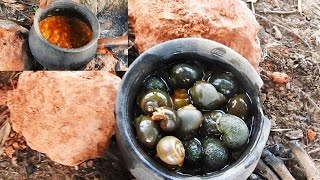 Download Snails Curry - Snails Catch n Cook in Pot - Escargot Stew and Eat - Escargot Recipe in Village Video