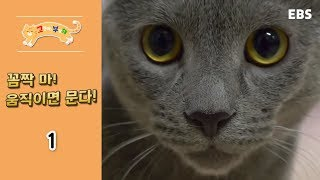 Download 고양이를 부탁해 - 꼼짝 마! 움직이면 문다 #001 Video