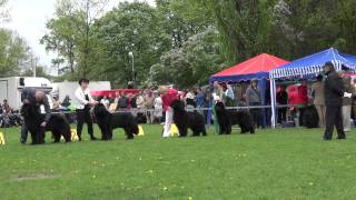 Download Jubileuszowa XX Międzynarodowa wystawa psów rasowy Video
