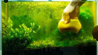 Download Aquarium Algae Problems, Algae Eaters - Aquarium Plants 101 Video