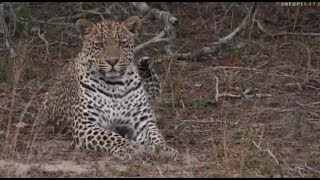 Download Pt 2 Safari Live's Sunrise Safari Drive at 7:00 AM on Oct 18, 2017 ( Hosana ) Video