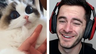 Download CATS FREAKING OUT Video