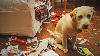 Download Funny Pets 🐶😂 Guilty Dogs Epic Reaction (Part 1) [Funny Pets] Video