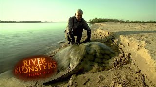 Download The Short Tailed River Stingray - River Monsters Video