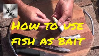 Download How to use Sardine, Pilchards as bait | The Hook and The Cook Video