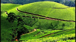 Download Best places to visit in Ooty Video