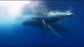 Download Greenpeace seismic blasting for oil TV Ad Video