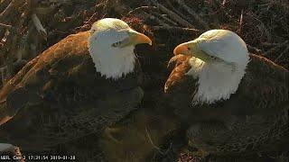 Download Live Bald Eagle Nest Cam, WE GOT AN EGG!! NEFL PTZ Cam 1 Video