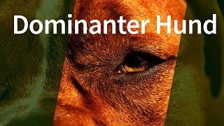 Download Dominanter Hund ► Gibt es dominantes Verhalten bei Hunden tatsächlich? Video