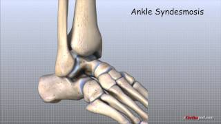 Download Ankle Anatomy Animated Tutorial Video