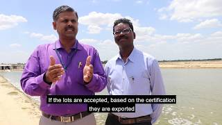 Download Codex in India: Standard for Quick Frozen Shrimp Video