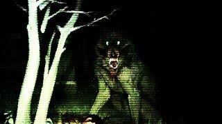 Download DON'T LOOK AWAY... | Gevaudan Video