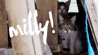 Download Meet Milly! Video