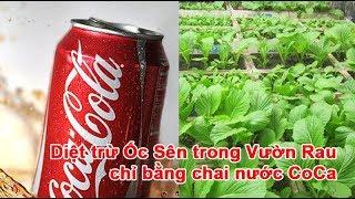 Download Diệt trừ Ốc Sên trong Vườn Rau chỉ bằng chai nước Coca Video