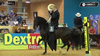 Download Campeonato Caballos de la Trocha Colombiana, XI Copa de los Santanderes 2018 Video