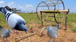 Download Unbelievably Helpful DIY Colored Pencil Bird Trap Video