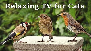 Download Calming TV for Cats : Cat TV - My Garden Birds - Relaxing Nature Music for Cats to Sleep Video