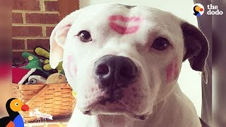 Download Inspiring Pit Bull Dogs Who Are Survivors   The Dodo Pittie Nation Video