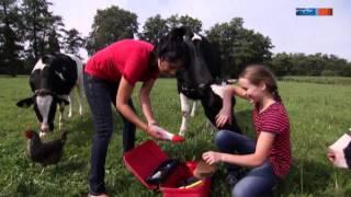 Download Kann man auf einer Kuh reiten? | Aussenseiter Spitzenreiter | MDR Video