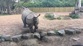 Download Rhino Poop Explosion! Video