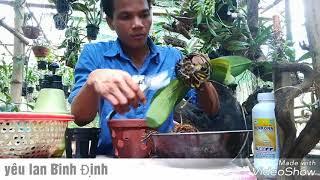 Download Kỹ thuật trồng và chăm sóc lan Hồ Điệp / thay chậu Video