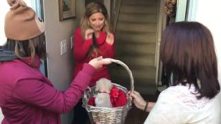 Download Christmas Puppy Surprise (Love Actually style) Video