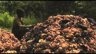 Download Nestle Failing on Child Labor Abuse Video
